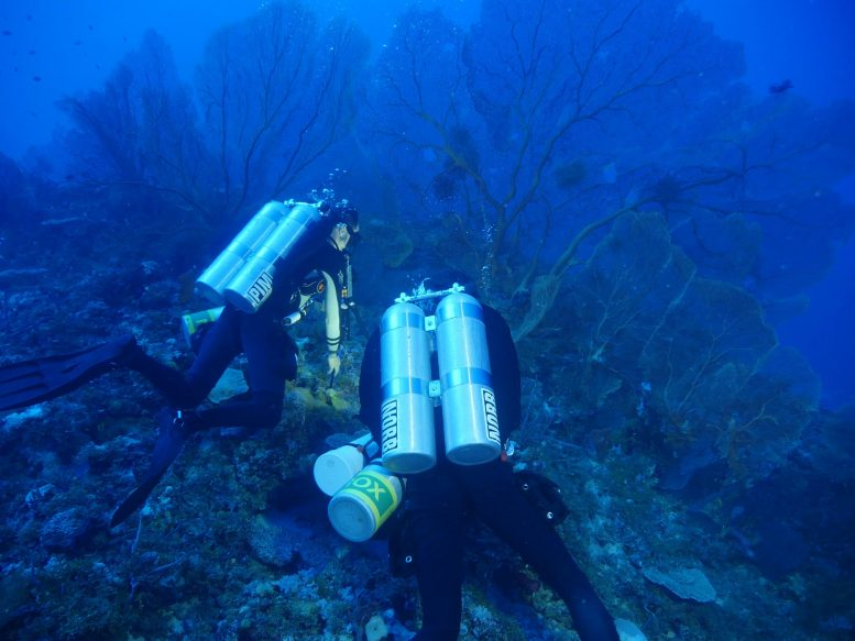 Researchers on a Collection Dive