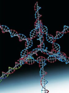 Researchers successfully used this nanoparticle, made from several strands of DNA and RNA, to turn off a gene in tumor cells