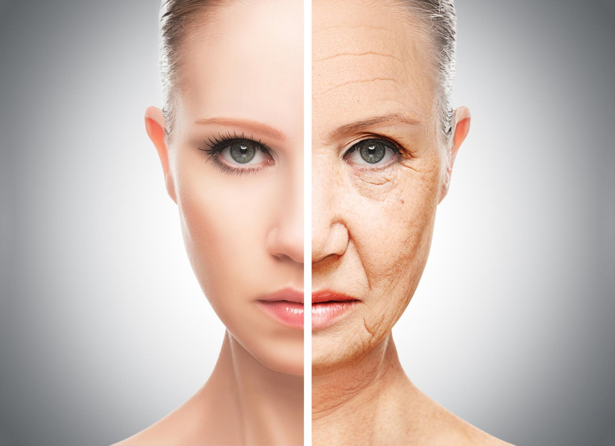 Researchers Solve Anti-aging Mystery – Identify Gene Responsible for Cellular Aging - SciTechDaily