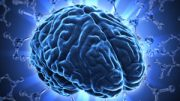 Rewiring in the brain is life-long