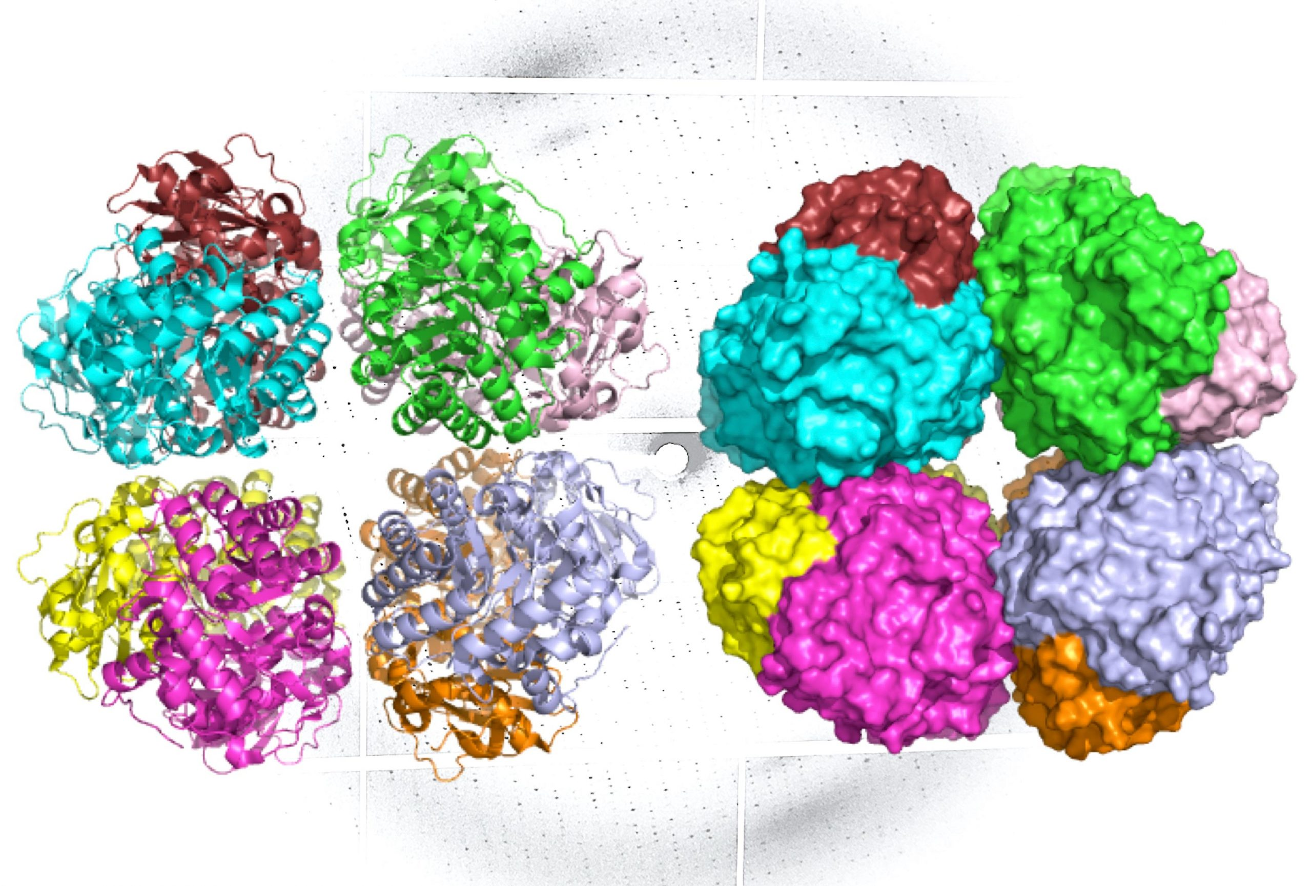 """""""Missing Link"""" Discovered in the Evolutionary History of Carbon-Fixing Protein Rubisco"""