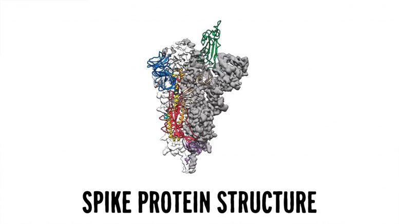 SARS-CoV-2 Spike Protein Structure