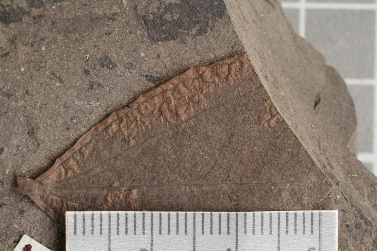 SMU Study Settles Prehistoric Puzzle