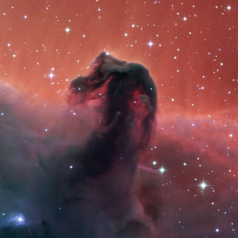 SPECULOOS Shows the Horsehead Nebula