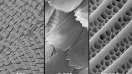 Scanning Electron Micrograph Butterfly Wing Scales