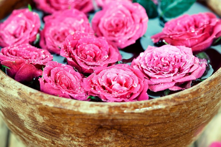 Scent Pink Roses