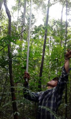 Scientist Collecting Leaves Secondary Forest Brazil