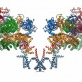 Scientists Decode the 3D Structure of the Calcium Channel