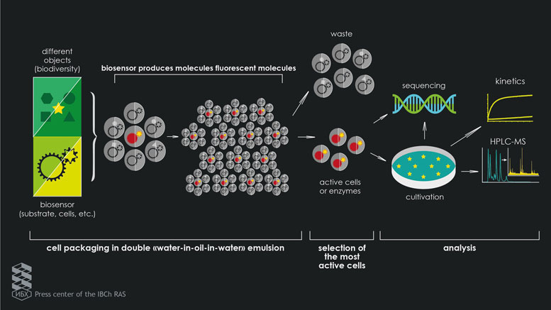 Scientists Develop Cell-Analysis Method That is Faster Than Robotic Workstations