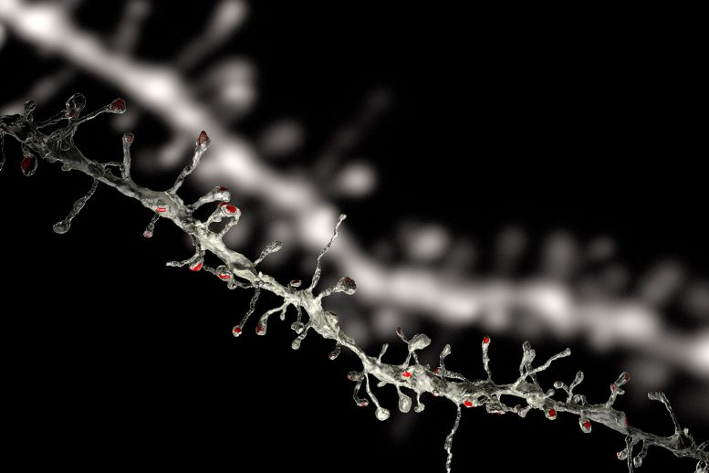 Scientists Discover Fundamental Rule of Brain Plasticity