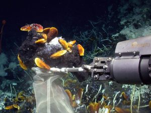 Scientists Discover Mussels and Sponges Thrive on Oil with the Help of Symbiont Bacteria