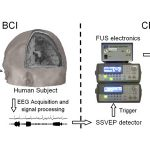 Scientists Establish Brain to Brain Interface between Human and Animal