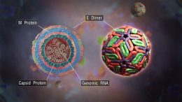 Scientists Explain the Survivability of Viruses