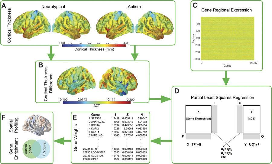Scientists Link Specific Genes to Individual Differences in Autistic ...