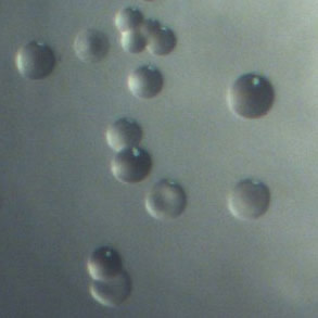 Scientists Reveal Six Changing Faces of Pneumococcus Infection