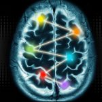 Scientists Show Multiple Cortical Regions Needed to Process Information