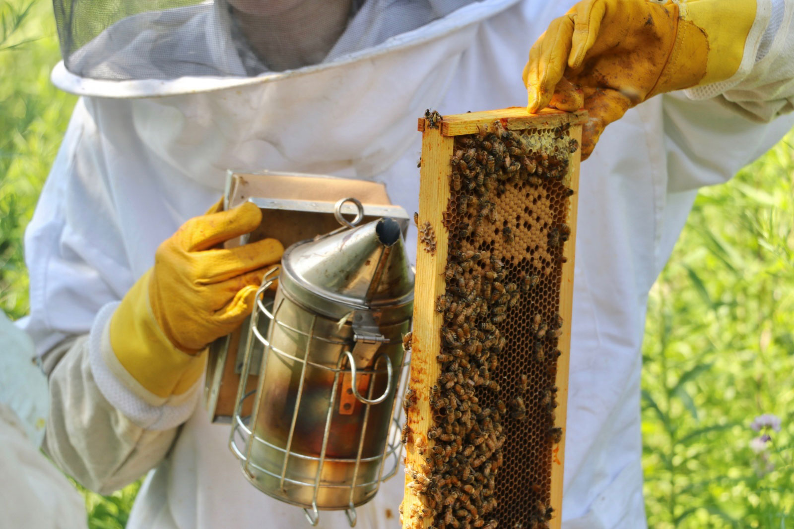 Discussion on this topic: How to Harvest Royal Jelly, how-to-harvest-royal-jelly/