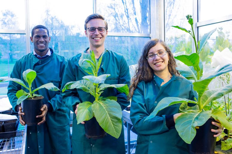 Scientists with Modified Plants