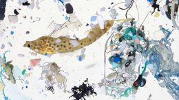 Scribbled Filefish Surrounded by Plastics