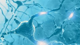 Selenium Protects Specific Interneurons in the Brain