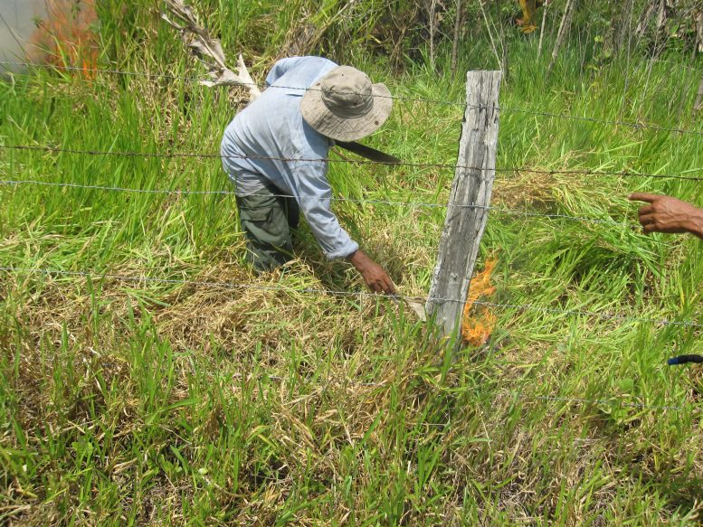 Setting Fire to Clear Land Agriculture