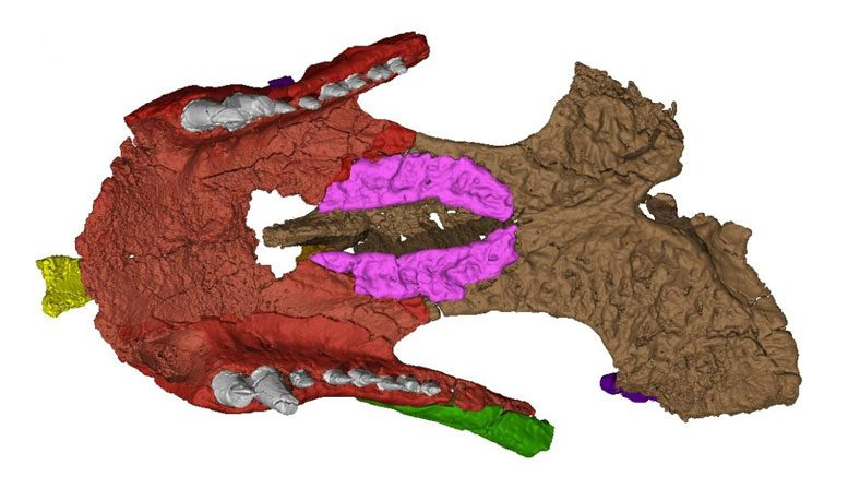 Shartegosuchus Palate