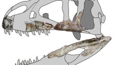 New Species of Giant Predatory Dinosaur Discovered in Thailand Provides a
