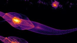 Simulation of Early Galaxy Formation