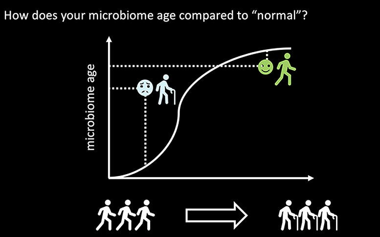 Skin Microbiome on Aging Graphic