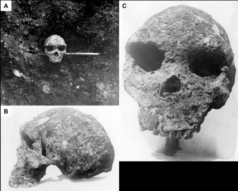 Skull Shortly After Discovery.