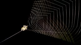 Slingshot Spider Ready to Launch Its Web