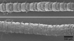 Slow Evolving Ghost Worms