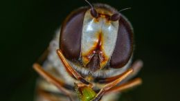 Small Fly Close Up