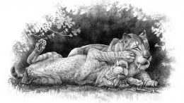 Smilodon fatalis Cubs Illustration