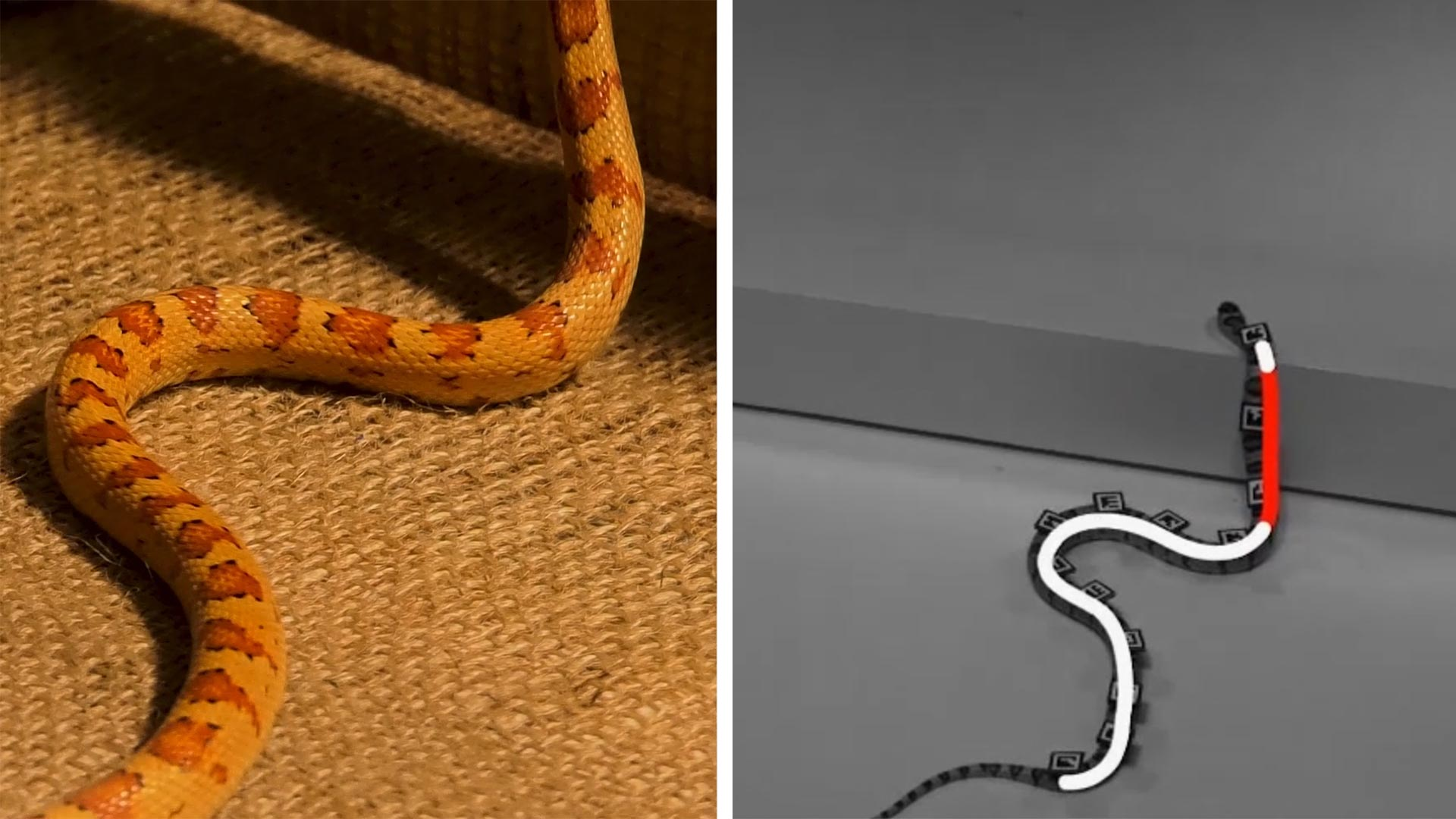 Slithering Snakes on a 2D Plane – Search and Rescue Robots Inspired by Snakes [Video] - SciTechDaily