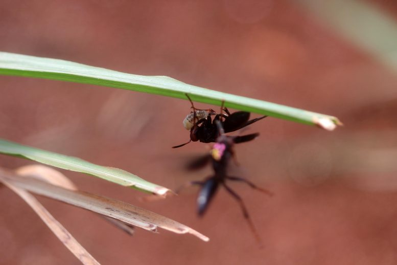 Social Paper Wasp With Pest Larva