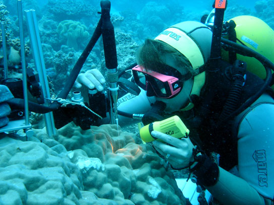 Soil erosion in tropical coastal areas accelerates coral death