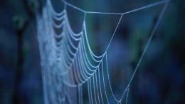 Spider Silk Key to New Bone-Fixing Composite