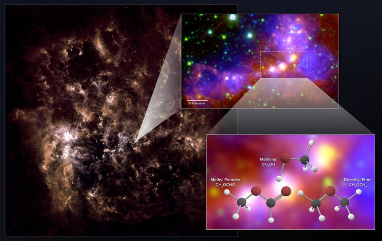 Stellar Embryos in Nearby Galaxy Contain Complex Organic Molecules