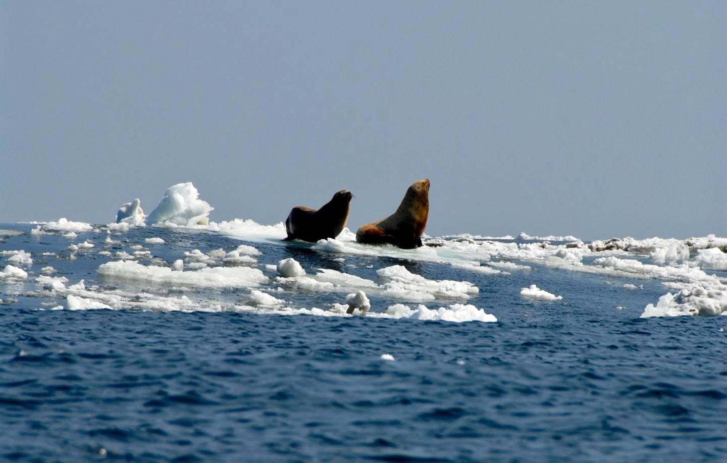 Melting Arctic sea ice linked to emergence of deadly virus