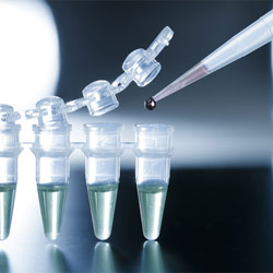 Stem Cells in Urine Have Potential for Numerous Therapies