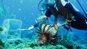 Stephanie Green Captures Lionfish