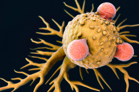 Stimulating Major Branches of the Immune System Halts Tumor Growth More Effectively