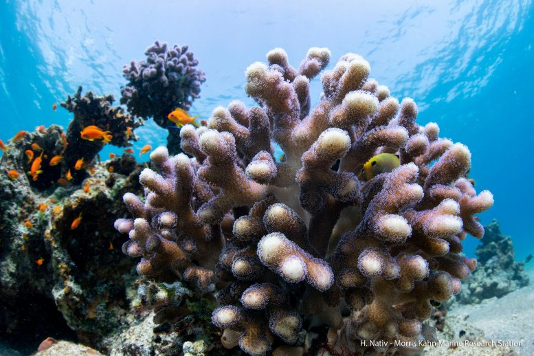 Stony Corals in the Wild