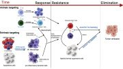 Strategies to Enhance the Activity of CAR T Cells Against Breast Cancer