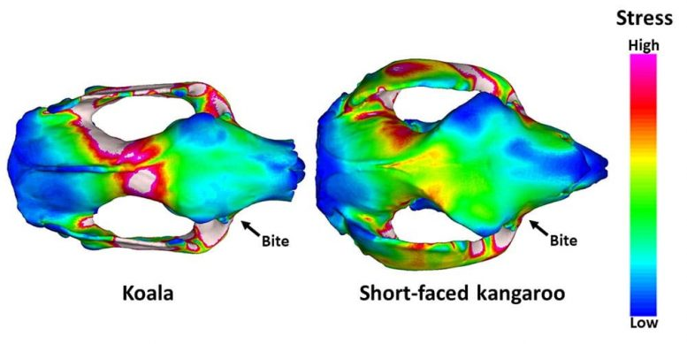 Stress Distributions Computed Tomography Scans