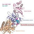 Structure of Key Control Element Behind Protein Misfolding Identified