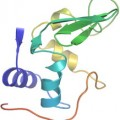 Structure of the protein lysozyme