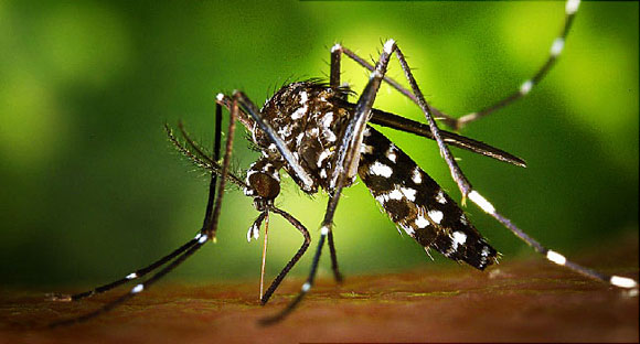 Study Finds Antibody That 'Neutralizes' Zika Virus