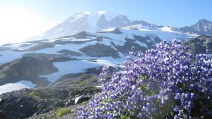 Study Reveals How Climate Change May Wildflower Communities